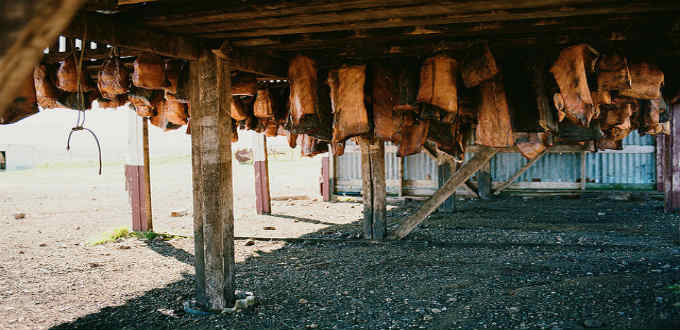To rid shark meat of poisonous substances it has to hang dry for months on end like seen here. PIC Chris Wonski