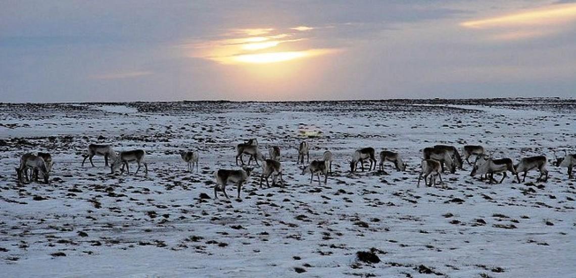 The Deer hunter – Iceland version