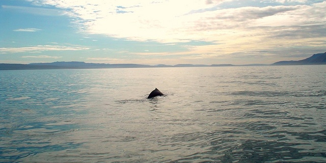 Whale watching from the coast of Iceland