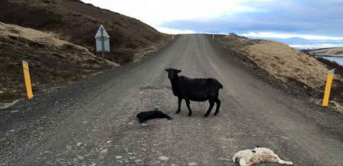 The most horrible thing on Iceland roads